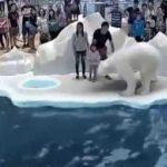 Zoológico Virtual Con Tecnología 7D Supera Todo Lo Visto Hasta Ahora