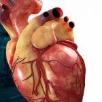 La cirugía del futuro se hará en un corazón virtual